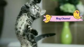 Мяу Channel - Кошачий дрифт