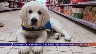 Yvelines | Au coeur de la formation des Handi'chiens, les chiens d'assistance