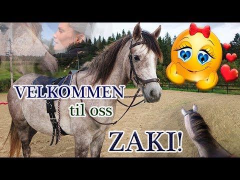 VLOGG: Velkommen til oss ZAKI ZAHIR E 'JAAZ