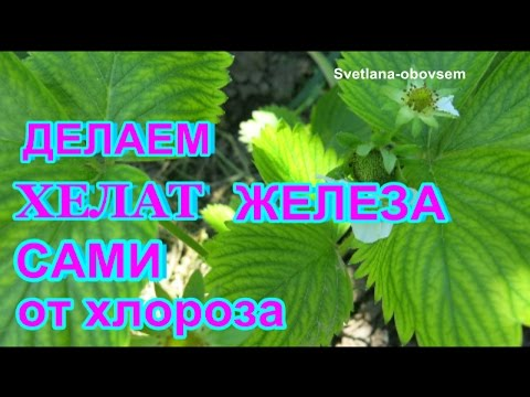 ДЕЛАЕМ САМИ ХЕЛАТ ЖЕЛЕЗА Лечим растения от ХЛОРОЗА .WE MAKE THEMSELVES CHELATE