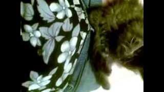 Помогите определить породу котенка