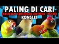 Masteran Pancingan Lovebird Fighter Konslet Paling Di Cari  Mp3 - Mp4 Download