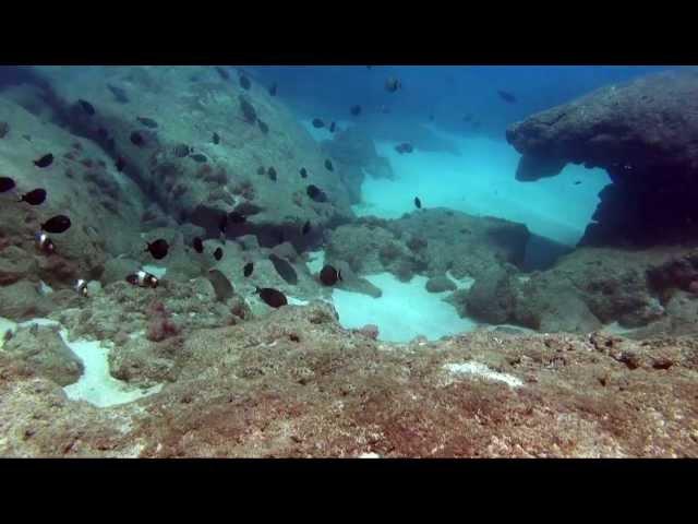 Oahu Dive Sites - Keiki