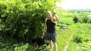 самодельное вино из груш и крыжовника ч2 3