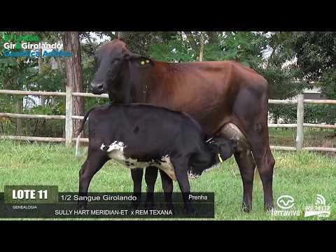 LOTE 11 - REM HONRADA MERIDIAN - REM0340 - 4274-AV - 5º LEILÃO GIR E GIROLANDO GENÉTICA ADITIVA