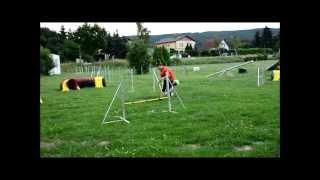 Obedience & Ag-training Denver 11 Months - German Version