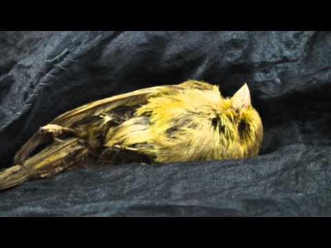 Canaries in the Coal Mine -- Gulf Blue Plague Warnings 1/07/11