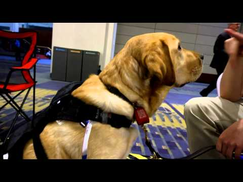 Computer-equipped dogs lead way in search-and-rescue: Smart America Expo