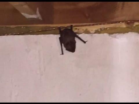 there s a bat in dana s basement youtube rh youtube com Snake in Basement bats in basement