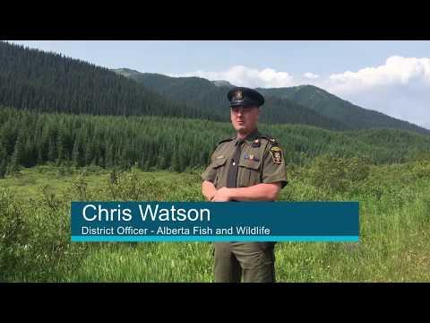 Report A Poacher – Alberta Fish And Wildlife Enforcement