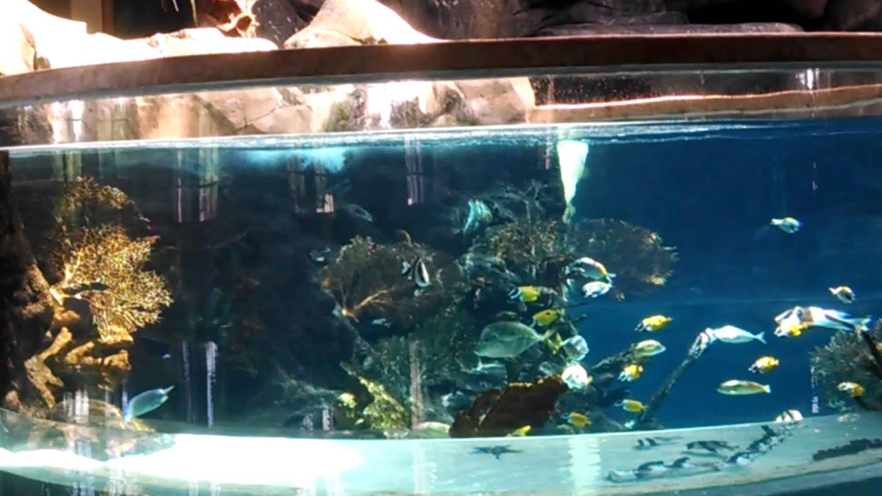 aquarium in an indoor swimming pool