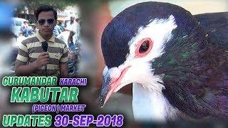 Guru Mandir Kabooter Market 30-9-2018 Latest Updates (Jamshed Asmi Informative Channel)In Urdu/Hindi