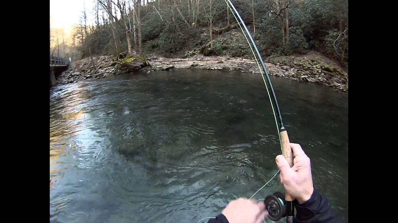 Upper Nantahala River Fly Fishing Brown Trout Youtube