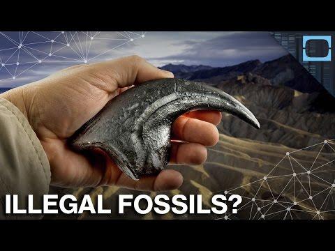 Inside The Dinosaur Fossil Black Market