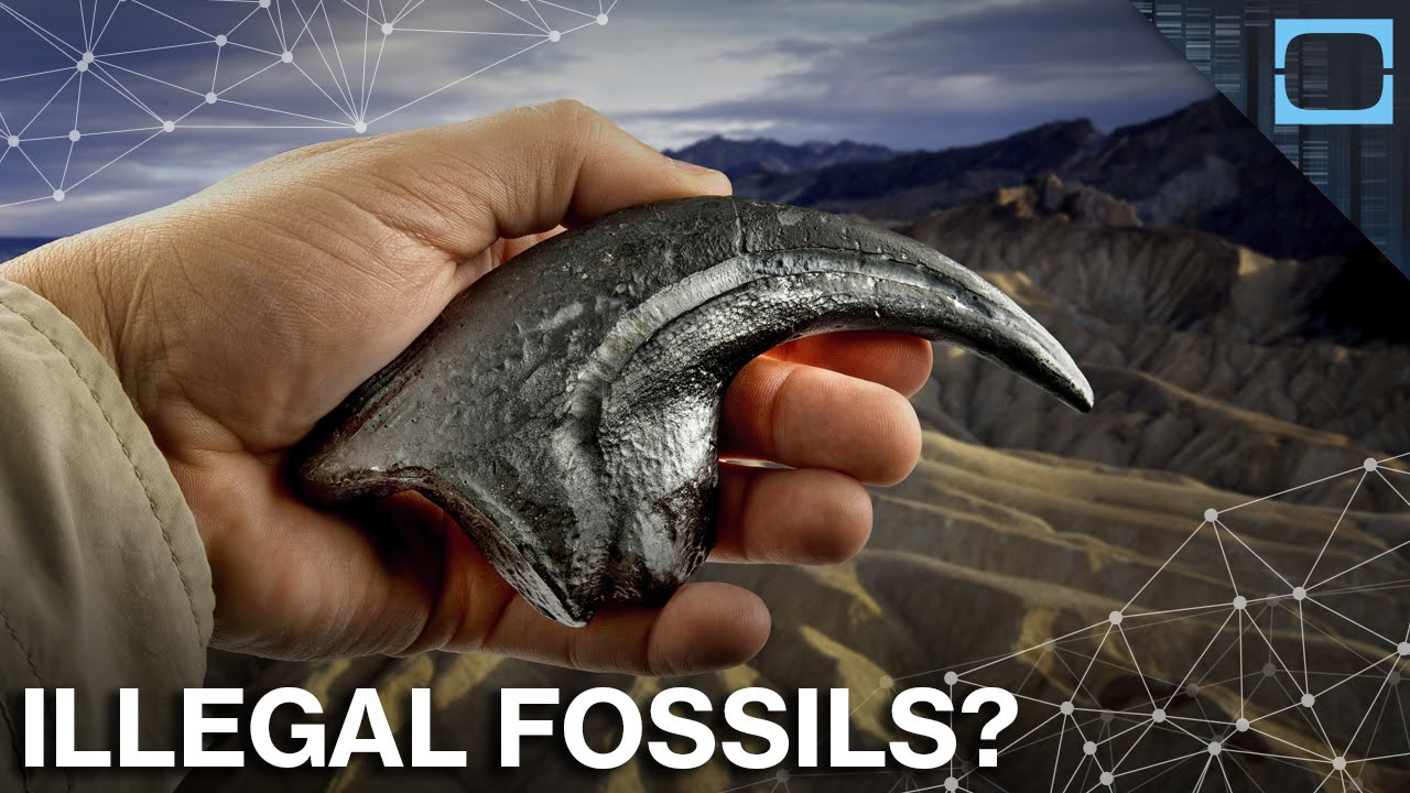 The Fossil Black Market is Huge, Illegal, and Very Profitable