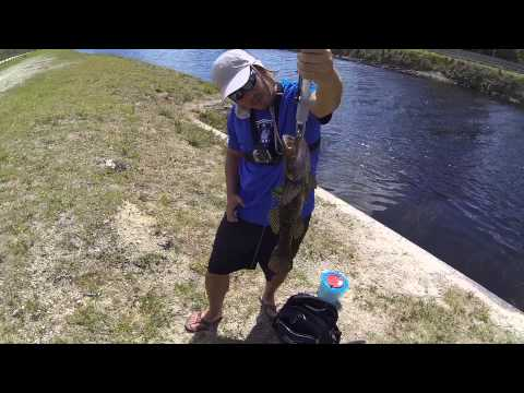 Super Rare Bigmouth Sleeper Caught Fishing A Florida Canal