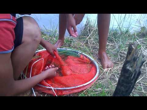 pescaria de camarão de água doce.  isca pra pescar todo tipo de peixe.