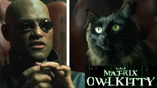 Morpheus meets my Cat (The Matrix)