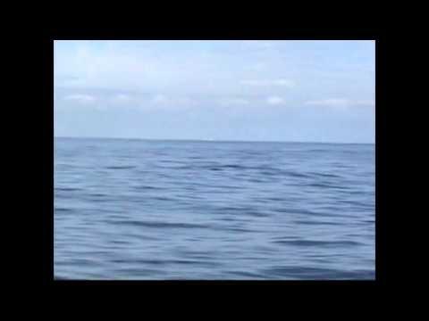 Zere Balea - Ballena Rorcual
