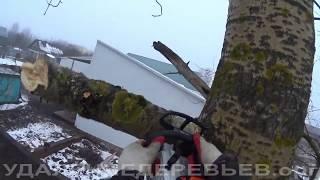 видео Вырубка деревьев в Наро- Фоминском районе