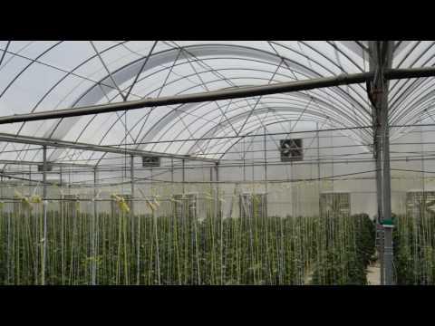 Farm qatar