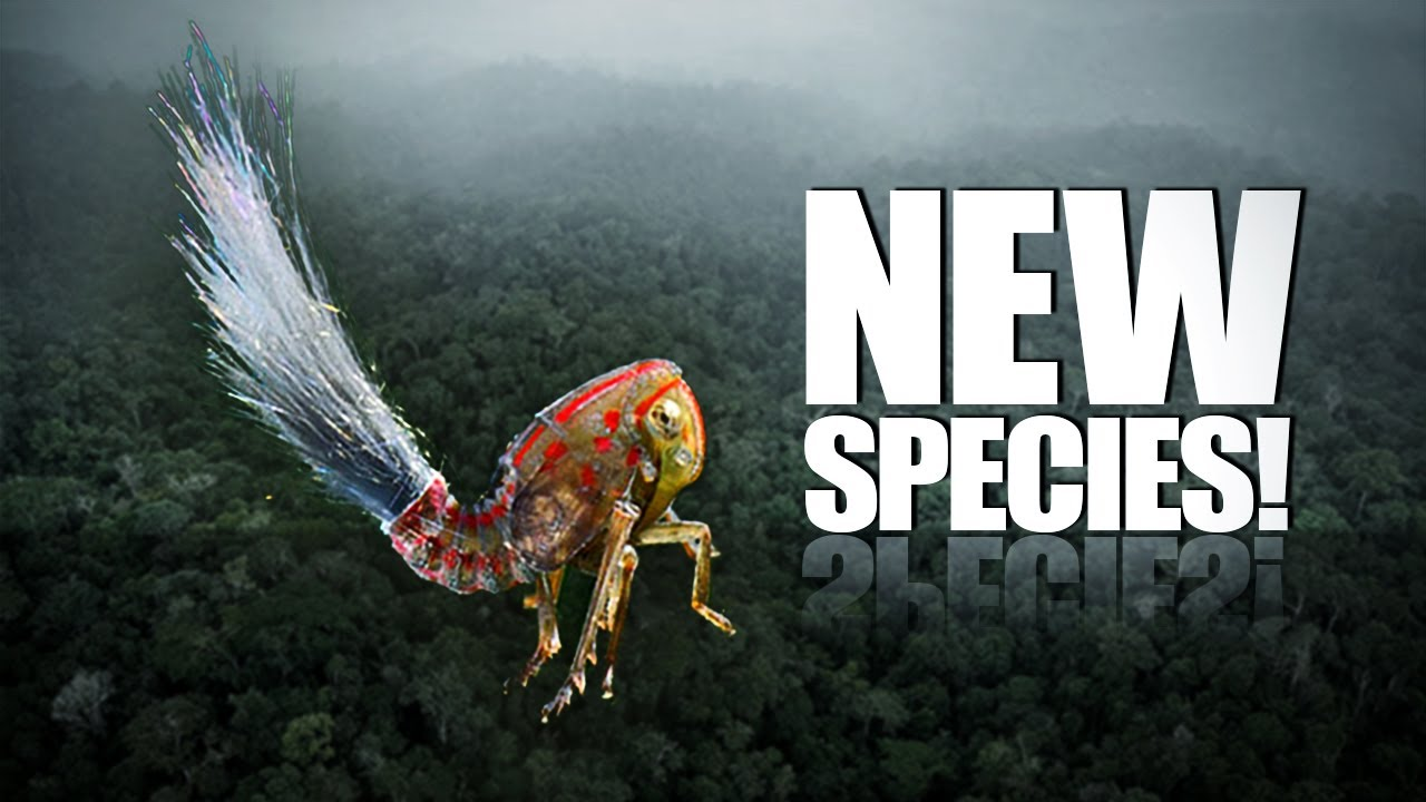 60 New Species Discovered!! - YouTube
