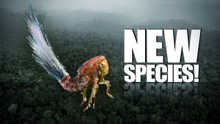 60 New Species Discovered!!