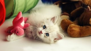 Adorable Cats Compilation - Cute Cats And Kittens #2