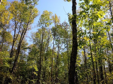 Forest Resource Department Head - June 12, 2017