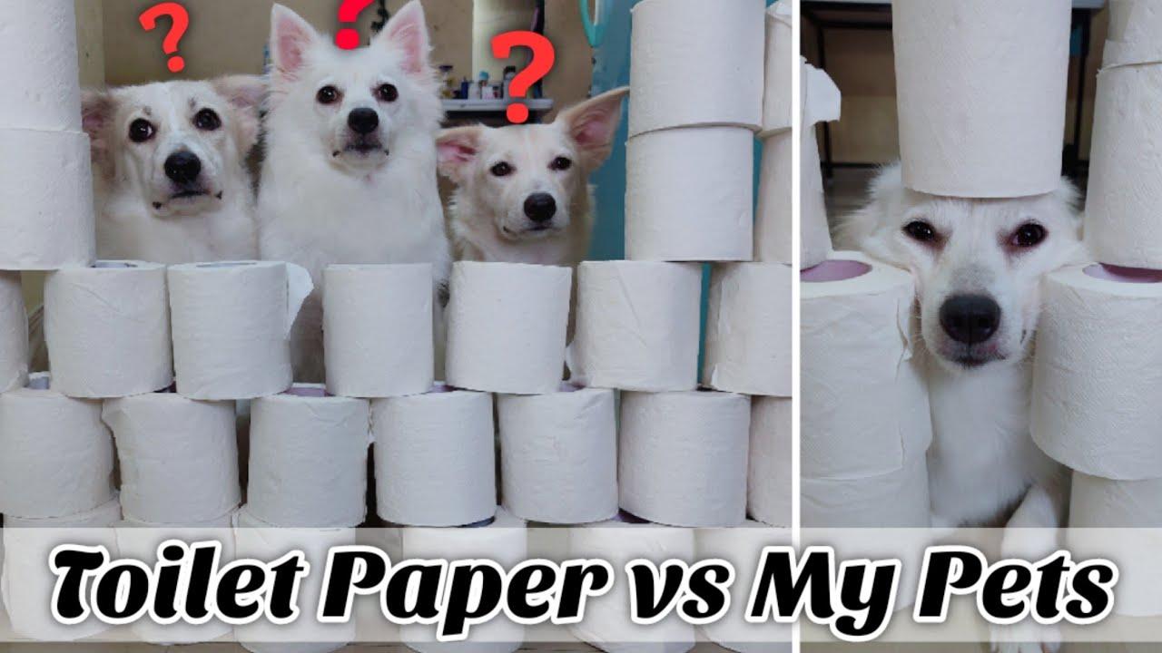 TOILET PAPER vs Kulotobaby, Riobaby & Lolo | Toilet Paper Wall Challenge! | Dog vs Toilet Paper