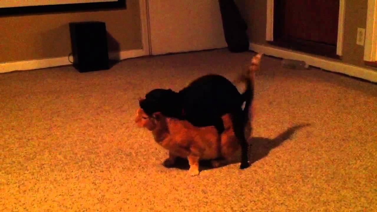 Female Dog Humps Male Cat - Youtube-5665