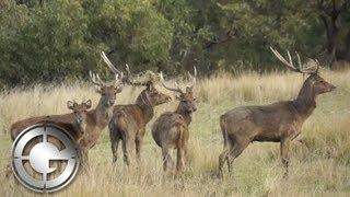 Aaron Davidson with Kingham Safaris in Australia on a Rusa Deer Hunt