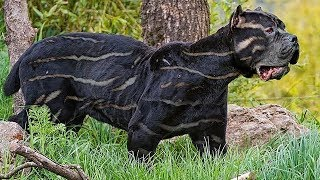 10 seltenste Hunderassen der Welt!