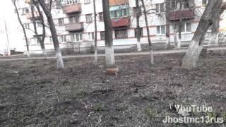 Лучшие видео с кошками - охота на голубей (приколы 2013)