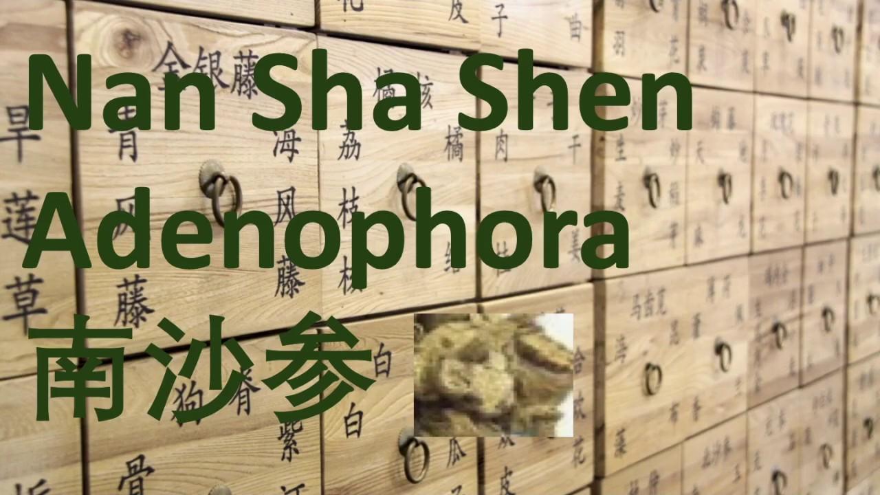 114 Chinese Herbal Medicine, Traditional Chinese Medicine – Nan Sha Shen (Adenophora) 南沙参 – 中医 中药 草药 #Herbalmedicine