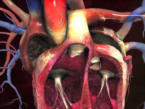 the circulatory system journey of a Circulatory system heart stations standard addressed: life science students know how blood circulates through the heart chambers, lungs, and body and how.