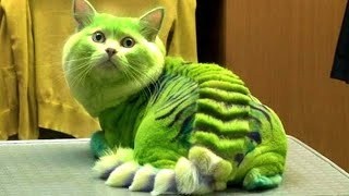5 MOST DANGEROUS CAT BREEDS IN THE WORLD IN HINDI