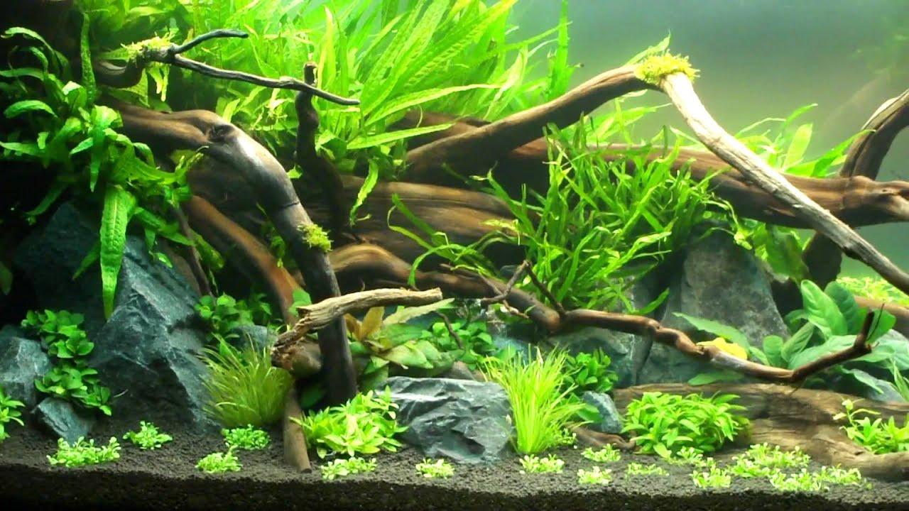 3d Fish Tank Wallpaper Aquascape Quot Natural Ground Quot Youtube