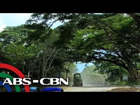 Bandila: 'Acacia tunnel', maaaring tamaan ng road-widening project sa Palawan