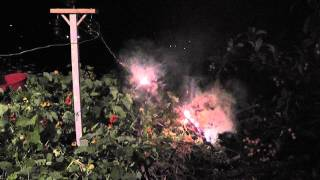 Tree Branch versus 11000 Volts