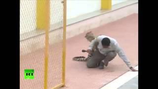 В Индии леопард пробрался в школу(Леопард напал на школьный персонал в Бангалоре и ранил 6 человек. Животное удалось временно усыпить и позже..., 2016-02-08T10:40:24.000Z)