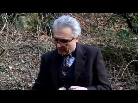 GANODERMA LUCIDUM BENEFICI. Parla il Dott. Ivo Bianchi