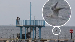 Mystery Sea Monster Caught On Camera In British Waters