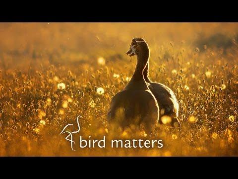 Beautiful Photography of Garden Birds: Bird Matters