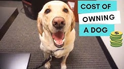 How much does it cost to own a dog?