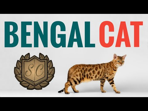 Bengal Cat - A Brief History, Characteristics And Facts - Saiful Chemistry