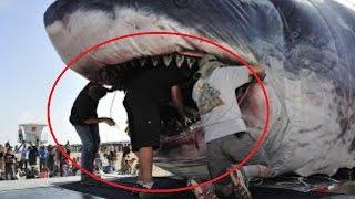 video hewan terbesar di dunia yang masih hidup 2016