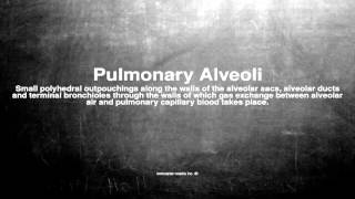 Medical vocabulary: What does Pulmonary Alveoli mean