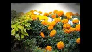 Цветы рассада, озеленение, благоустройство территорий.(, 2015-04-18T15:44:50.000Z)