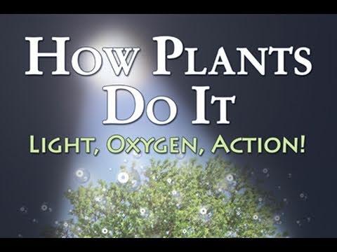 Public Lecture—How Plants Do it: Light, Oxygen, Action!